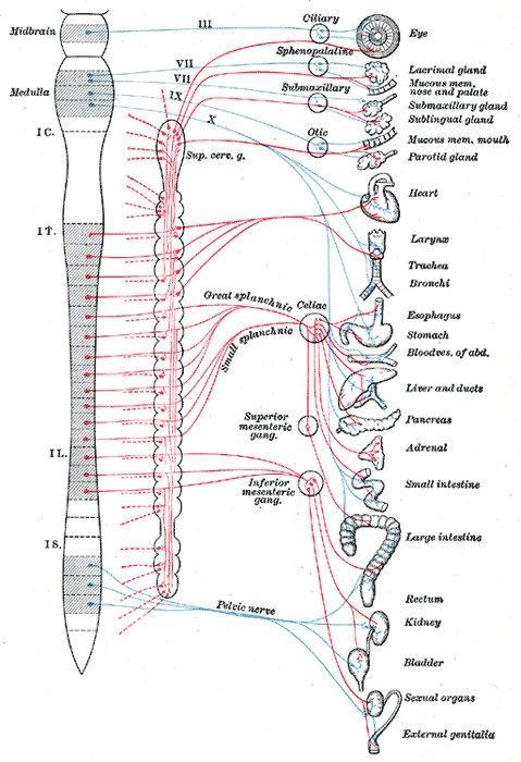 Acupuncture and Sound Assisted Autonomic Modulation Technique: Part 1 Background